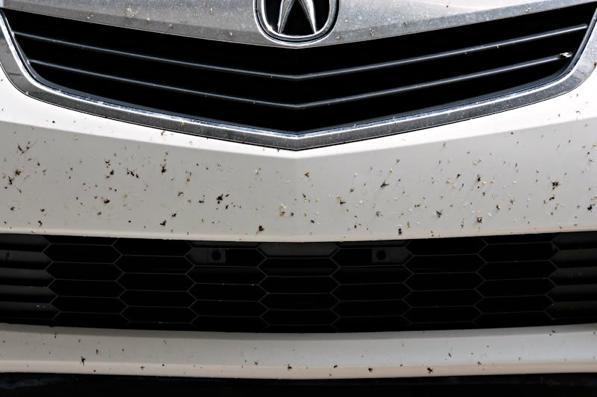 Rimuovere insetti auto: come togliere i moscerini dall'auto con il fai da te?