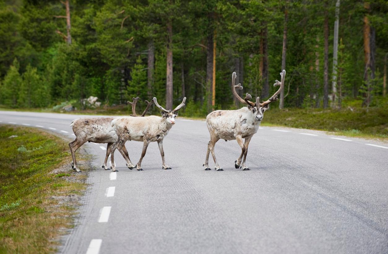 Animale investito in auto: cosa fare, chi chiamare, obblighi e multe